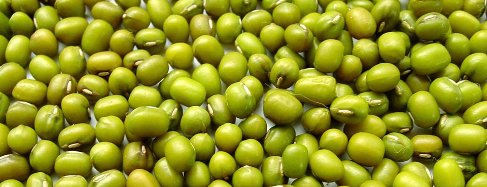 Mung Beans for Healthy Diet